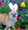 Easter Baskets for Dogs